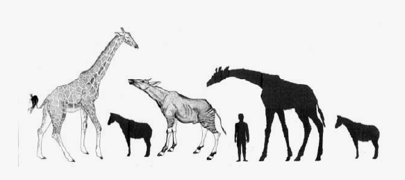 Giraffe Conservapedia