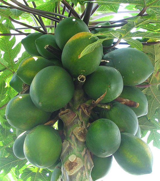 File:Papayas.jpg