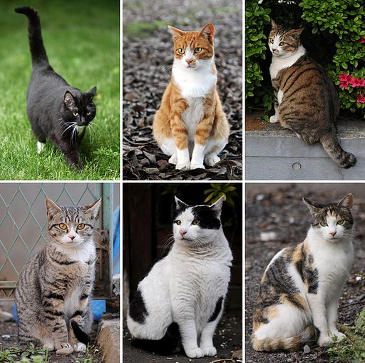 File:512px-Collage of Six Cats-01.jpg