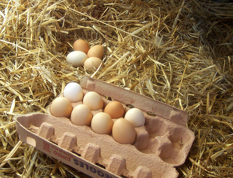 File:FreerangeEggs.jpg
