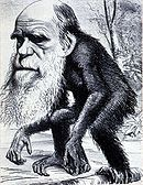 File:Darwin monkey cartoon.jpg