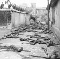 Vultures and corpses in the street of Calcutta, 1946.jpg