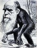 darwin theory evolution