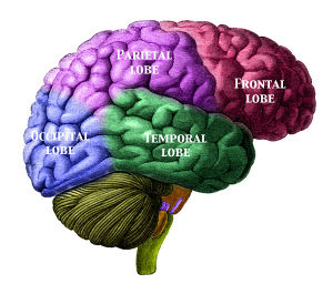 religiosity and larger frontal lobes conservapedia